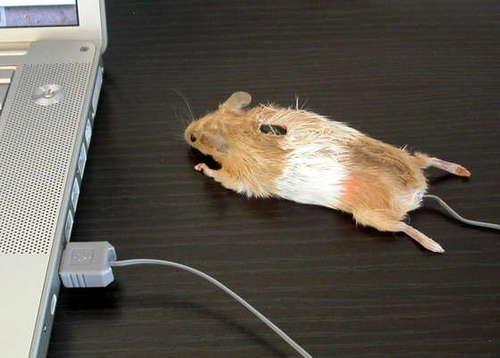 mouse-real.jpg